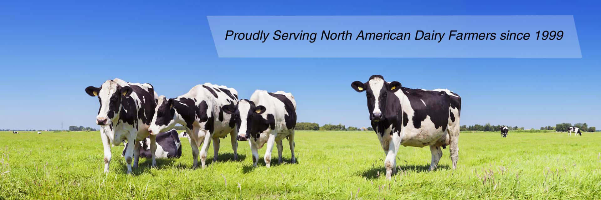 Field with dairy cows and blue skies | Proudly Serving North American Dairy Farmers since 1999