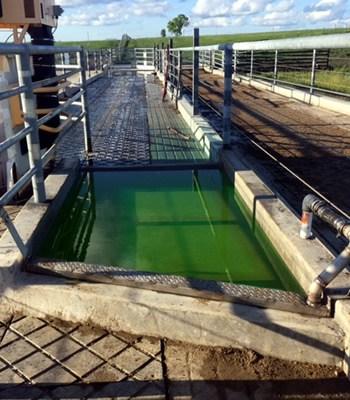 Automated Hoof Bath Systems